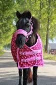 DKR Sports Mini Winterdecke 200grs für pony's