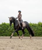 LeMieux Loire Polo Bandagen