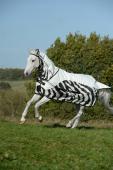 Bucas Buzz-Off Rain Zebra Full Neck